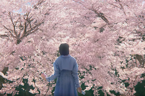 桜のスーパードライのCM3